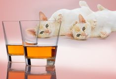 Alcohol.    Beer, liquor, wine, foods containing alcohol -- none of it is good for your cat. That's because alcohol has the same effect on a cat's liver and brain that it has on humans. But it takes far less to do its damage. Just two teaspoons of whisky can cause a coma in a 5-pound cat, and one more teaspoon could kill it. The higher the proof, the worse the symptoms.