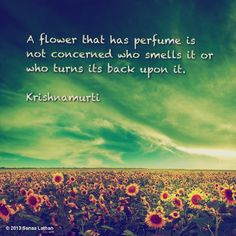 Jiddu Krishnamurti , The Role of a Flower - Ράδιο Ταξιδευτές Free Spirit Quotes, Wise Quotes, Famous Quotes, Holy Quotes, Inspirational Quotes, J Krishnamurti Quotes, Jiddu Krishnamurti, Cool Words, Wise Words