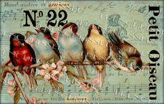 RAINBOW de Collage Digital ORIGINAL de aves por FrenchKissed