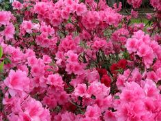 Azaleas!  Plant in the front. Planter box side