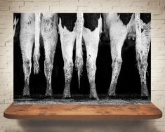 This fine art black and white photograph print is a group of cows standing together at the trough eating. I loved watching them swing their tails and this curly one was my favorite! My photographs are great as home decor. You can even give them as house warming gifts. The 5x7s look