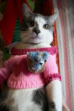 Cat in pink sweater