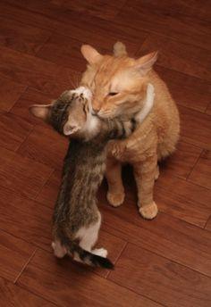 Cute kitten hug