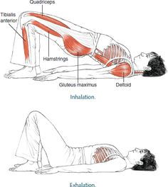 Dwi Pada Pitham Two-Legged Table © Leslie Kaminoff's Yoga Anatomy  B E N E F I T S — Opens the chest and shoulders and brings awarenes...