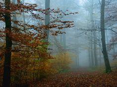 Heinrich Wilhelm: Nebel im Herbstwald - Glasbilder 60 x 80 cm