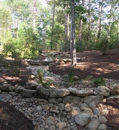 something as simple as a dry creek bed might be all that's needed to slow the flow of water, reduce the chances of erosion and give the water time to seep into the soil. In a setting like this forest, a simple palette of native plants that don't mind having their toes wet (think ferns, sedges and reeds)