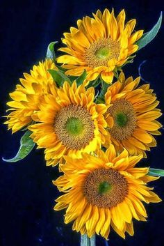 Sunflowers Happy Flowers, Flowers Nature, Pretty Flowers, Sun Flowers, Sunflower Pictures, Sunflower Art, Sunflower Types, Sunflower Garden, Sunflowers And Daisies