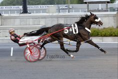World Record For Wiggle It Jiggleit Horse Harness, Harness Racing, Beautiful Horses, Animals Beautiful, Standardbred Horse, Racing News, Horse Racing, Race Horses, Thing 1