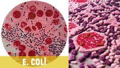 petri dish rugs from Bev Hisey