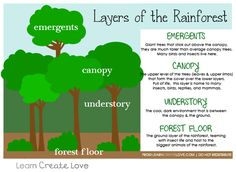Layers of the Rainforest Printable