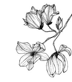 trendy flowers illustration black and white graphic design Black And White Flowers, Black And White Painting, Black And White Pictures, Flower Illustration Pattern, Illustration Blume, Botanical Illustration Black And White, Floral Illustrations, Flower Tattoos, Designs To Draw