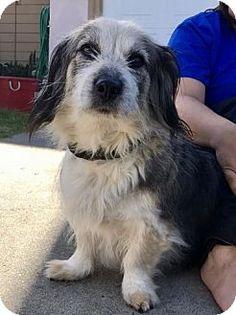 Pittsburg, CA - Corgi/Spaniel (Unknown Type) Mix. Meet Clementine, a dog for adoption. http://www.adoptapet.com/pet/18150604-pittsburg-california-corgi-mix