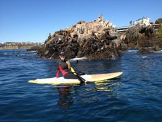 Nancy Malleo with the sea lions of Laguna Beach, CA | Nextbyathena.com #beach #sup #sealions #lagunabeach Next Brand, Sea Lions, Brand Ambassador, Laguna Beach