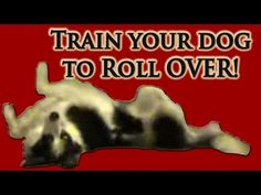 Dog Trick, Train your dog to roll over.  Pam's Dog Academy; Pamela Johnson www.pamsdogtraining.com