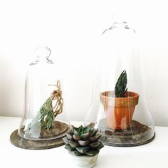 Vintage Glass Dome Display : Wood Base by ShopKingDude on Etsy