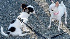 In vacanza con gli animali, sì ma dove? A Lucca, eletta città 'dog friendly'