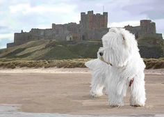 Bamburgh Castle Northumberland with Sir Hamish McTavish.