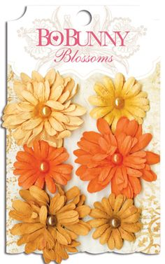 Don't forget the Daisies! 8 color varieties...what's your favorite? #bobunny