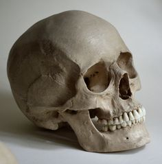 Female Human Skull Replica by artskulls on Etsy
