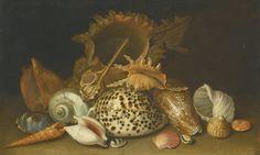 Circle of Antoine Berjon STILL LIFE OF SEA SHELLS Estimation 6,000 — 8,000 GBP Sold  10,000 GBP