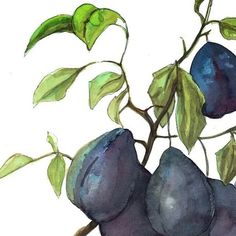 Juicy plums  #fashionillustration #illustration #drawing #painting #paint #sketch #illustrate #illustrateyourworld #instadrawingg #instafashion #artfido #aquarelle #aquarela#art_fashion  #watercolor_gallery #sketching #nawden #watercolor #ladyterezie #lovelilife #fashionillustrator #instaillustration #pinodesk