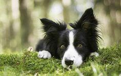 Картинки по запросу взгляд собаки