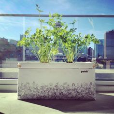 Patch Planters: A User-Friendly Urban Agriculture Solution