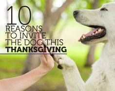 10 Reason to invite the dog this Thanksgiving
