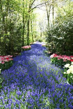 Path: Blue River, Keukenhof, Holland