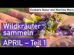 Essbare Wildkräuter erkennen & sammeln im April 1 - YouTube Kraut, Vegetables, Youtube, Food, Healing, Nature, Health, Essen, Vegetable Recipes