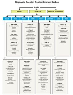 Diagnostic decision tree for common rashes