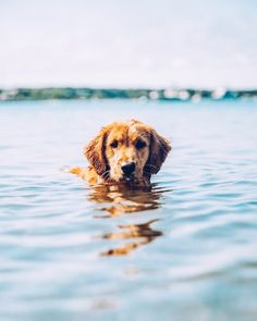 Water goggies!! Best kind of dogs are the ones who will beat you into the water