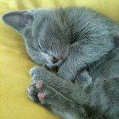 I just LOVE these grey kitties, they have a special place in my heart! :)
