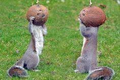 Eekhoorn-squirrel