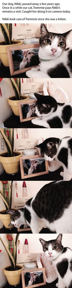 Caught our cat paying our dog's remains a visit today. :') They were best…