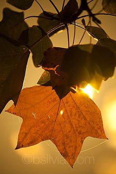Autumn leaf                                .