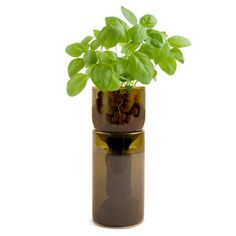 "Cool ""Grow Bottle"". Hydroponic herbs in your kitchen window made from reclaimed wine bottle. Excellent"