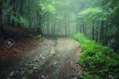 10589774-Camino-a-trav-s-de-un-bosque-verde-despu-s-de-la-lluvia-con-niebla-visible-en-el-fondo-Foto-de-archivo.jpg (1300×864)