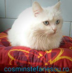 My cat Cleopatra