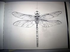 Tattoo idea- dragonfly wings on human spine & skull