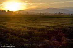 Sunset | Rural Scape | Padi Field | Kedah, Malaysia