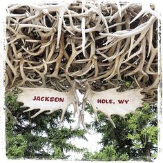 Jackson, WY in Wyoming Jackson Hole Airport, Wyoming, Christmas Bulbs, Events, Holiday Decor, Christmas Light Bulbs