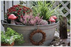 Plant picture result for zinc tub - Plant picture result for zinc tub Informations About Bildergebnis für zinkwanne bepflanzen Pin Yo - Plant Images, Plant Pictures, Fall Planters, Garden Planters, Garden Crafts, Garden Projects, Diy Crafts, Farm Gardens, Outdoor Gardens