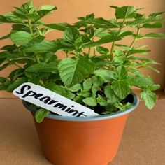 OnlinePlantCenter 5.5 in. English Thyme Culinary Herb Plant-H35075.5IN - The Home Depot Mint Herb, Sage Herb, Herb Garden Kit, Herb Gardening, Container Gardening, Bay Leaf Tree, Catnip Plant, Garden Pond Design, Growing Mint
