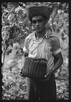A coffee picker near Corozal, Puerto Rico