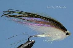 Dropbox - lake erie rainbow smelt.jpg