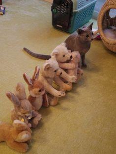 mariusu:    (via 【画像】みんな並んでいたので自分も並んでみたようです。: 〓 ねこメモ 〓)