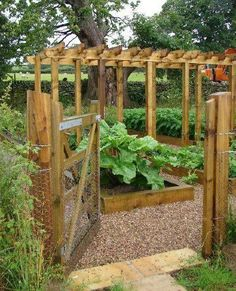 Fruit and Vegetable Garden – Timber edged rectangular raised beds with gravel paths between. A rabbit proof fence and gate keeps unwanted visitors out!
