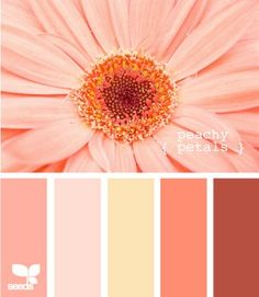 Design Seeds, for all who love color. Apple Yarns uses Design Seeds for color inspiration for knitting and crochet projects. Peach Color Schemes, Peach Colors, Color Combos, Orange Color, Orange Pink, Colours, Three Color Combinations, Red Peach, Yellow