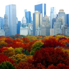 New York in autumn! The beautiful colors, cool crisp air...one knows the Holiday Season is near!
